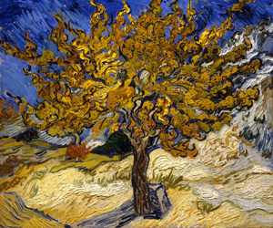 Van Gogh's Mulberry Tree (Norton Simon Museum)